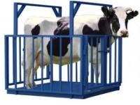 Весы для взвешивания животных, весы для взвешивания скота